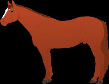 Quarter Horse icon