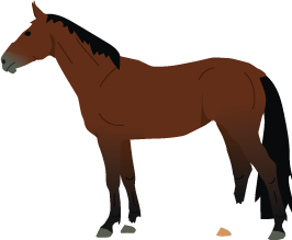 Belgian Warmblood icon