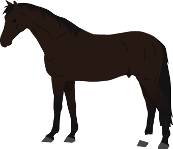 Dutch Warmblood icon