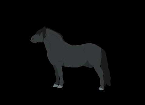 Shetland Pony icon
