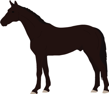 Swedish Warmblood icon