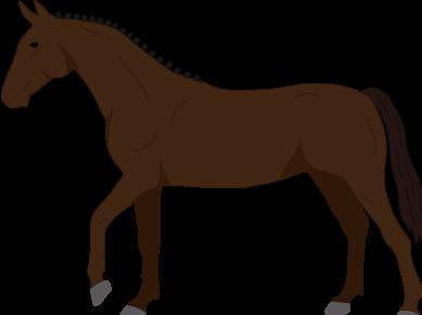 Trakehner icon