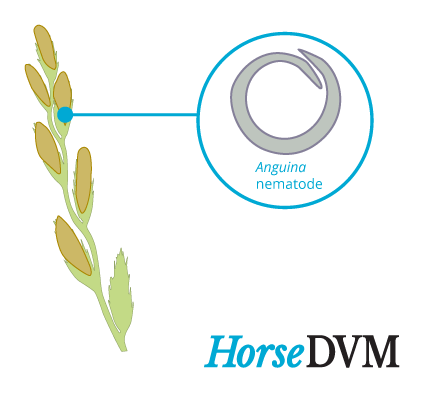 Annual ryegrass toxicity horses