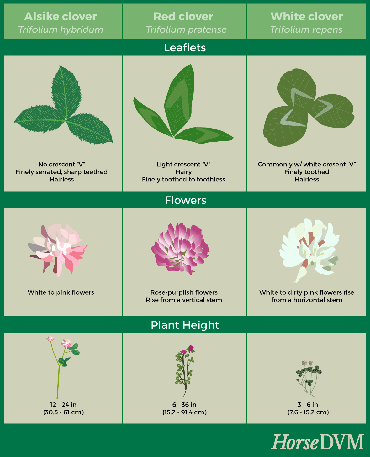 Clover species comparison