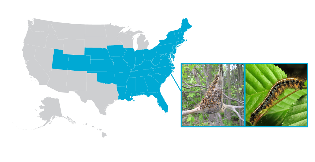 Eastern tent caterpillars location in United States