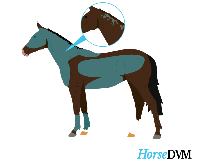 Where to look for Equine onchocerciasis