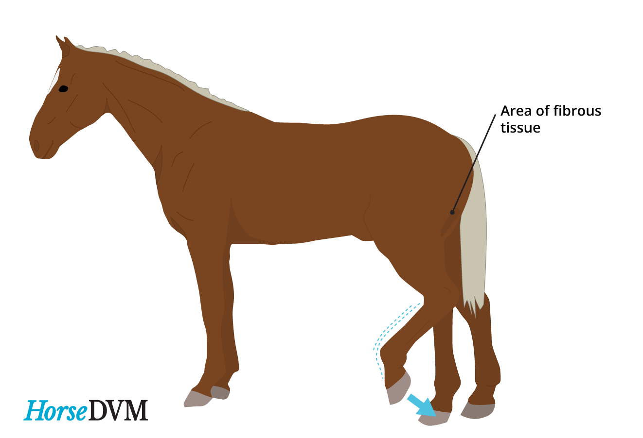 Image of a typical horse with Fibrotic myopathy