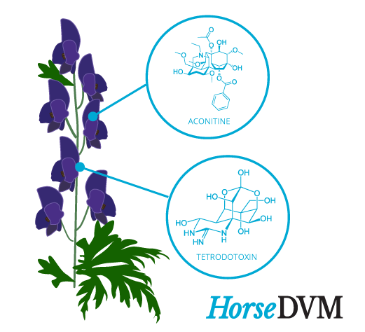 Monkshood toxic components