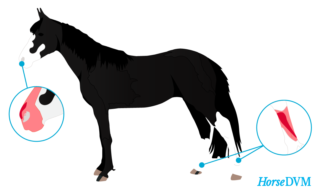 Photosensitive areas on horses