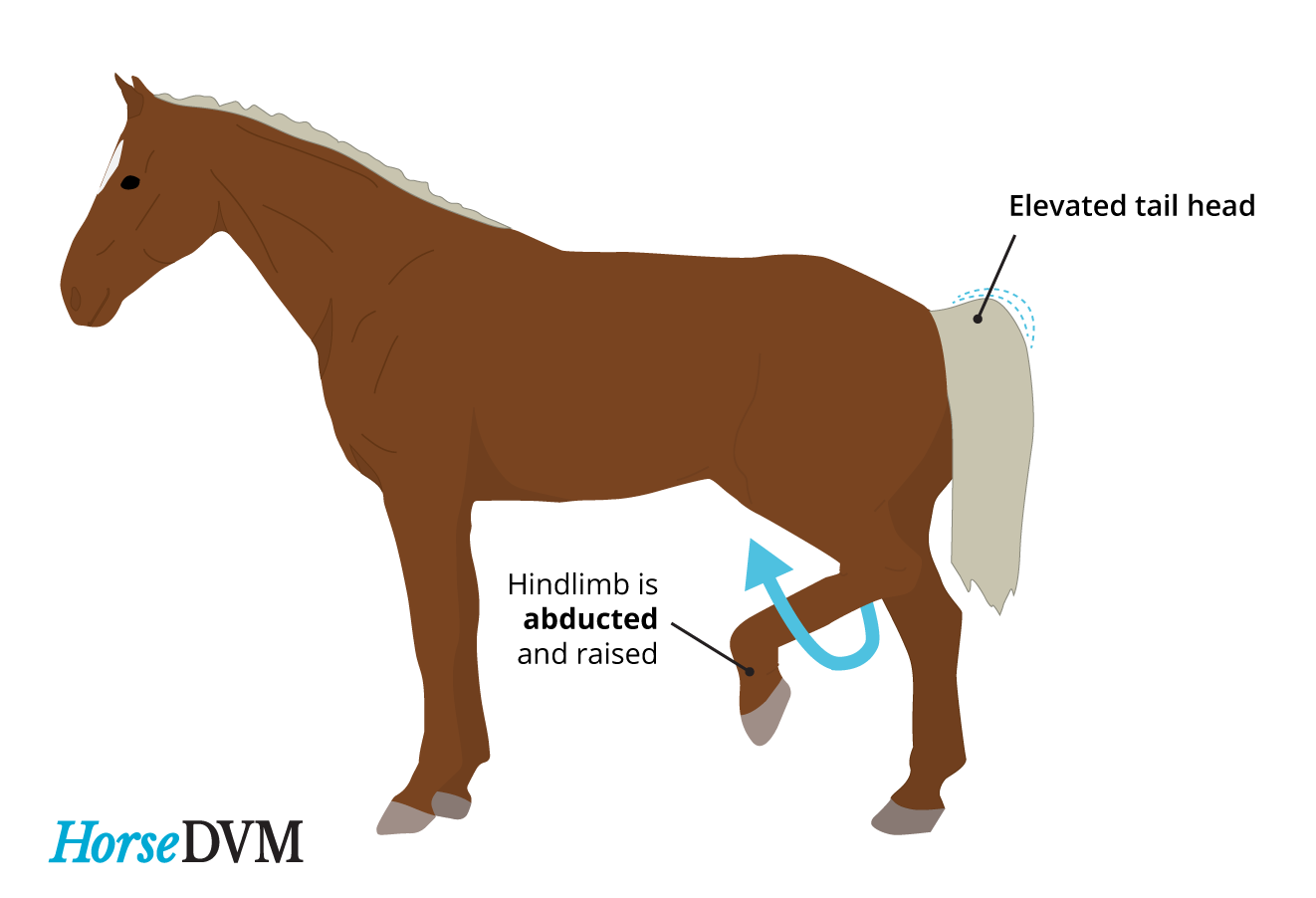Image of a typical horse with shivers
