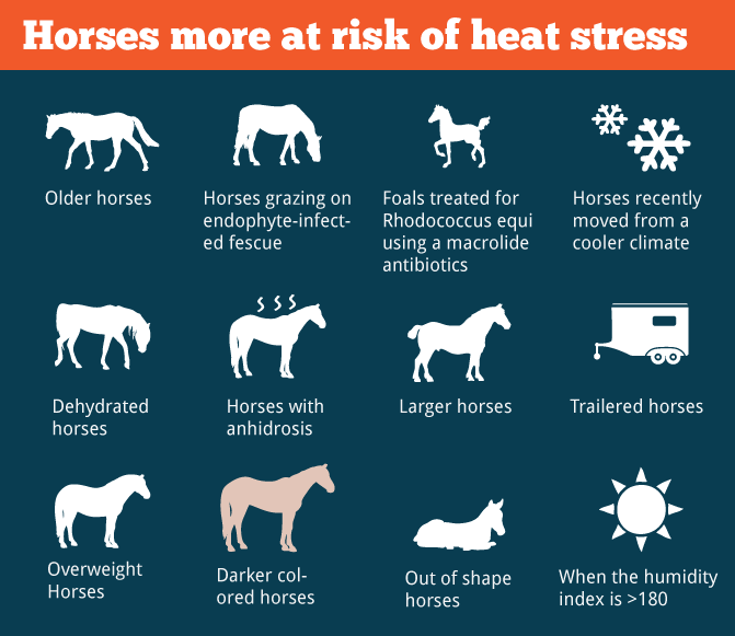 Horses more at risk of heat stress