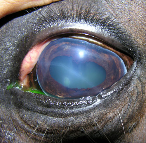 PHOTO CREDIT: Michael Porter Veterinary Blog