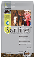 Sentinel LifeTime icon