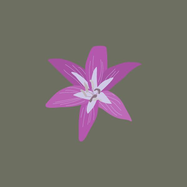 Amaryllis spp image