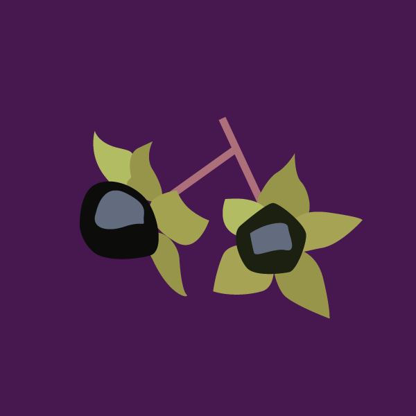 image of Deadly Nightshade