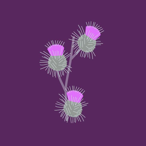 Arctium spp image