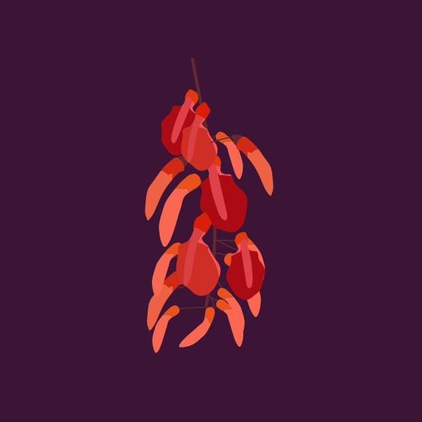 Erythrina crista-galli image