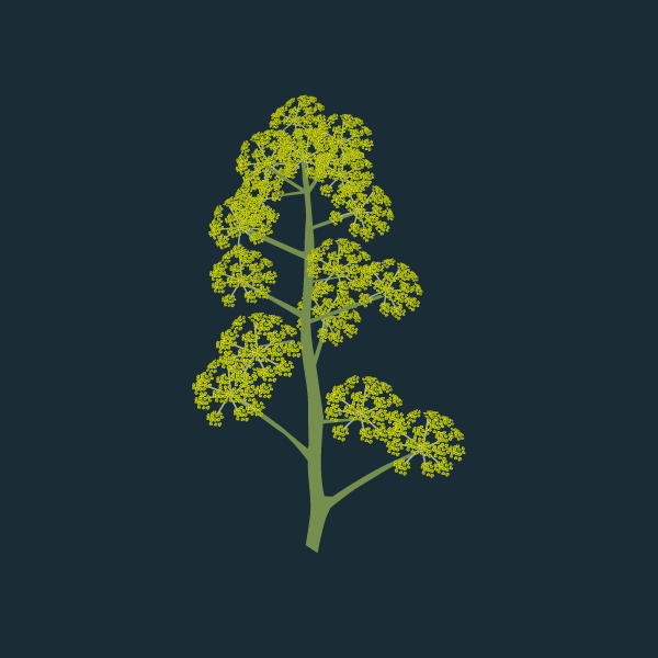 giant_fennel