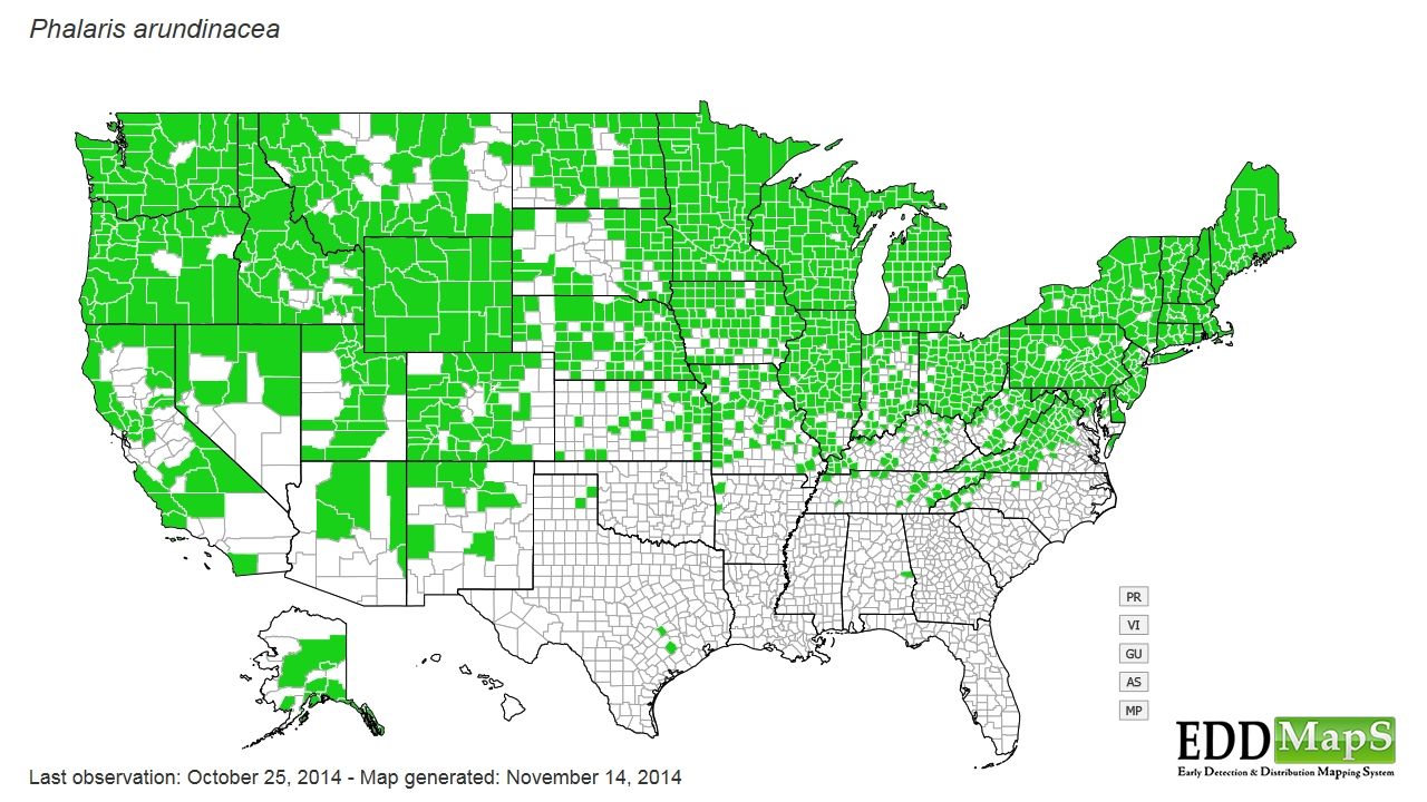 Reed canarygrass  distribution - United States