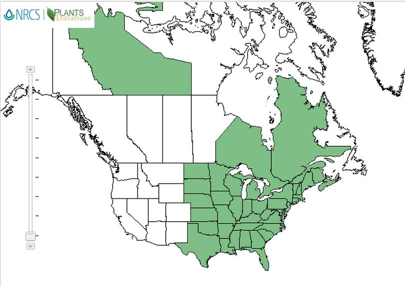 White snakeroot distribution - United States