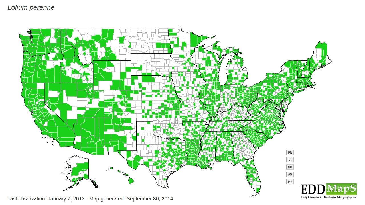 Perennial ryegrass distribution - United States