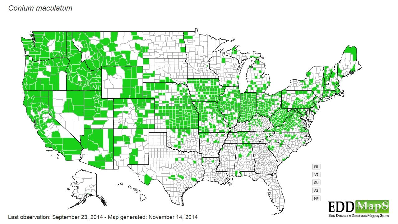 Poison hemlock distribution - United States