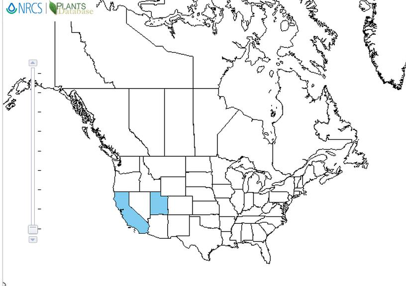 Bitter almond distribution - United States
