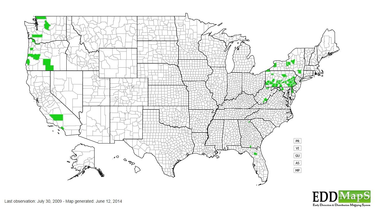 Stinging nettle distribution - United States