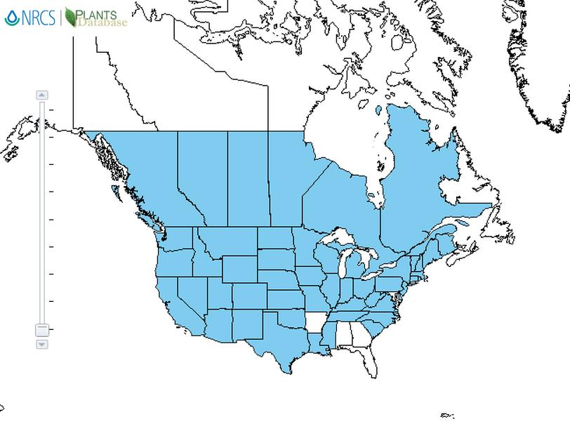 Kochia distribution - United States
