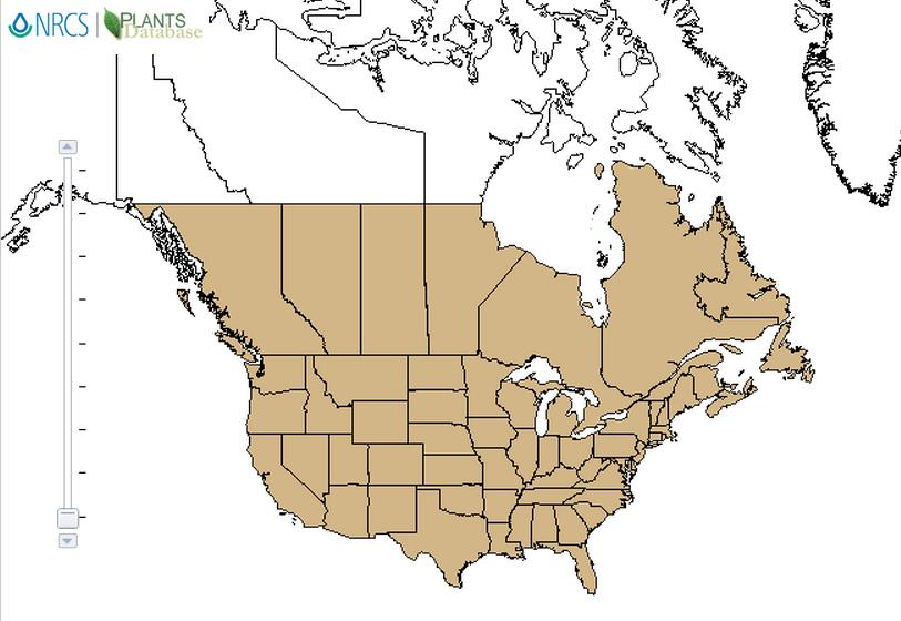 Yellow woodsorrel distribution - United States