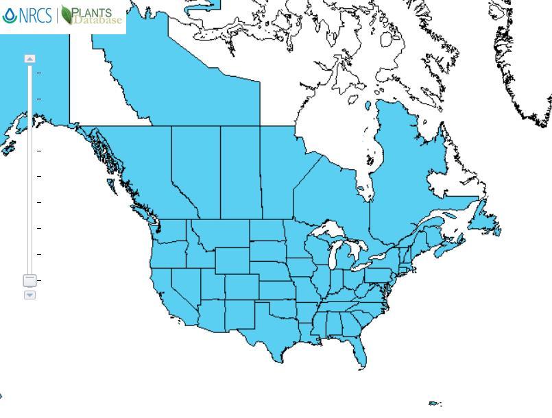Indian mustard distribution - United States