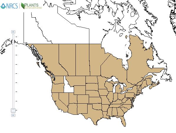 Oak  distribution - United States