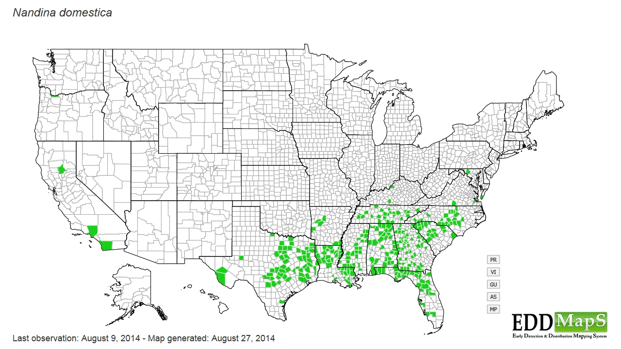 Sacred bamboo distribution - United States