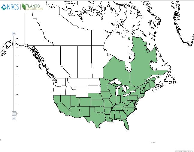 Cardinal flower distribution - United States