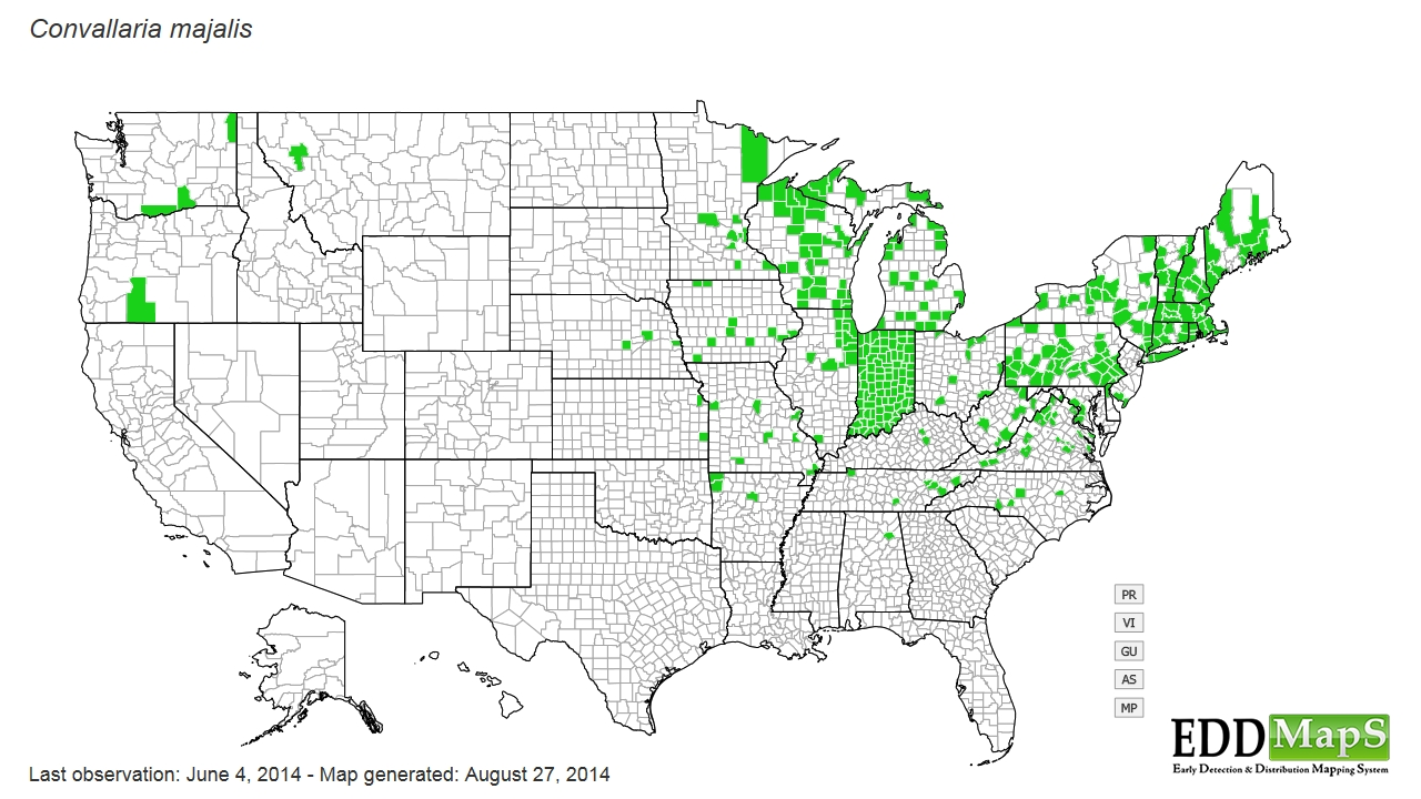 Lily of the valley  distribution - United States