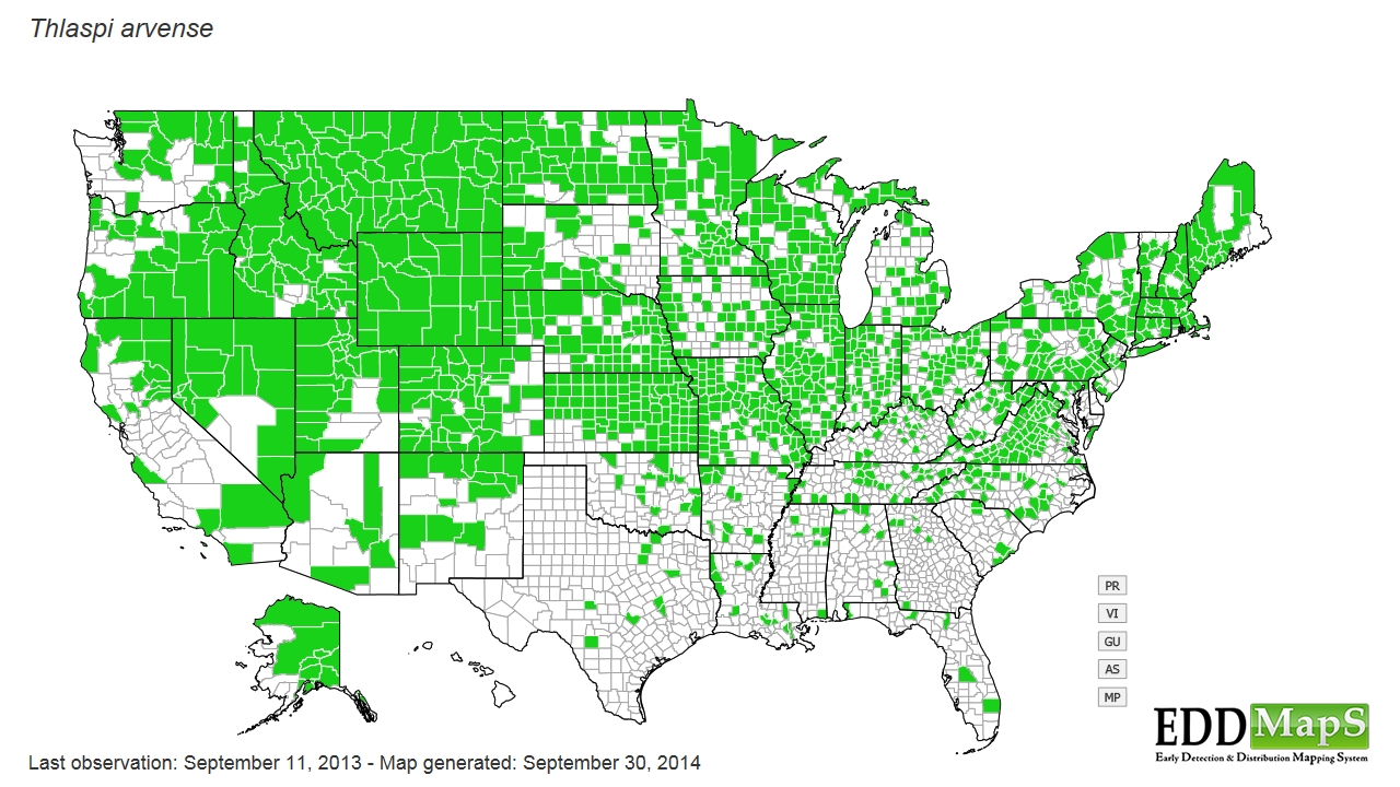Field pennycress distribution - United States