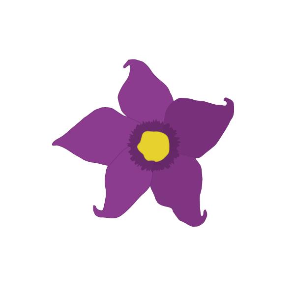 Solanum spp image