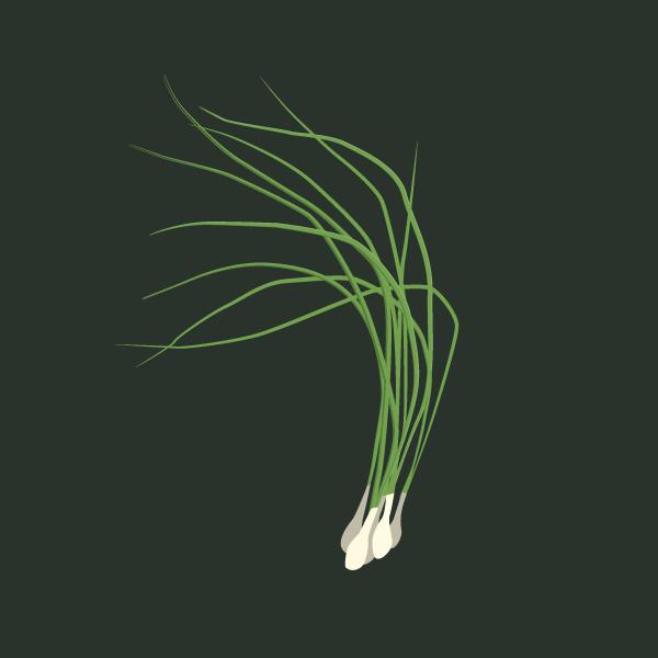 Allium spp. image