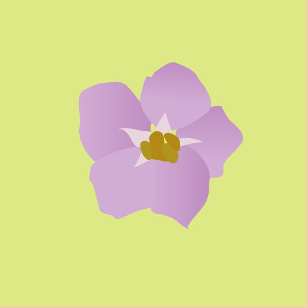 Solanum glaucophyllum image