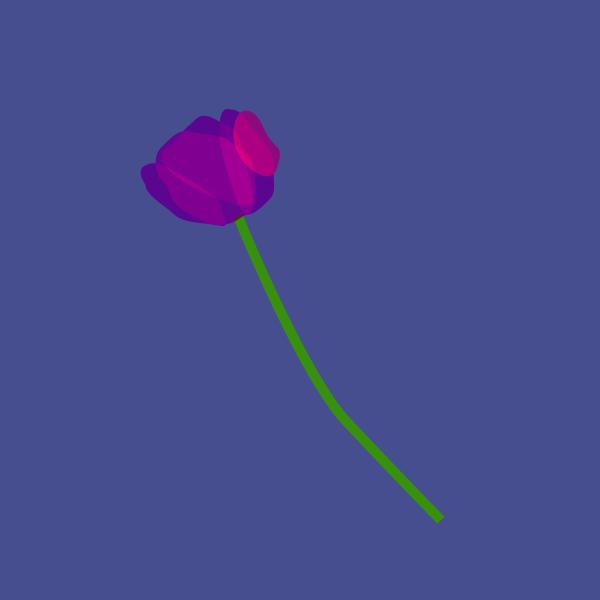 Tulipa spp image