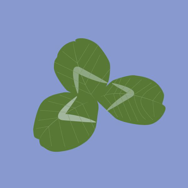 Trifolium repense image