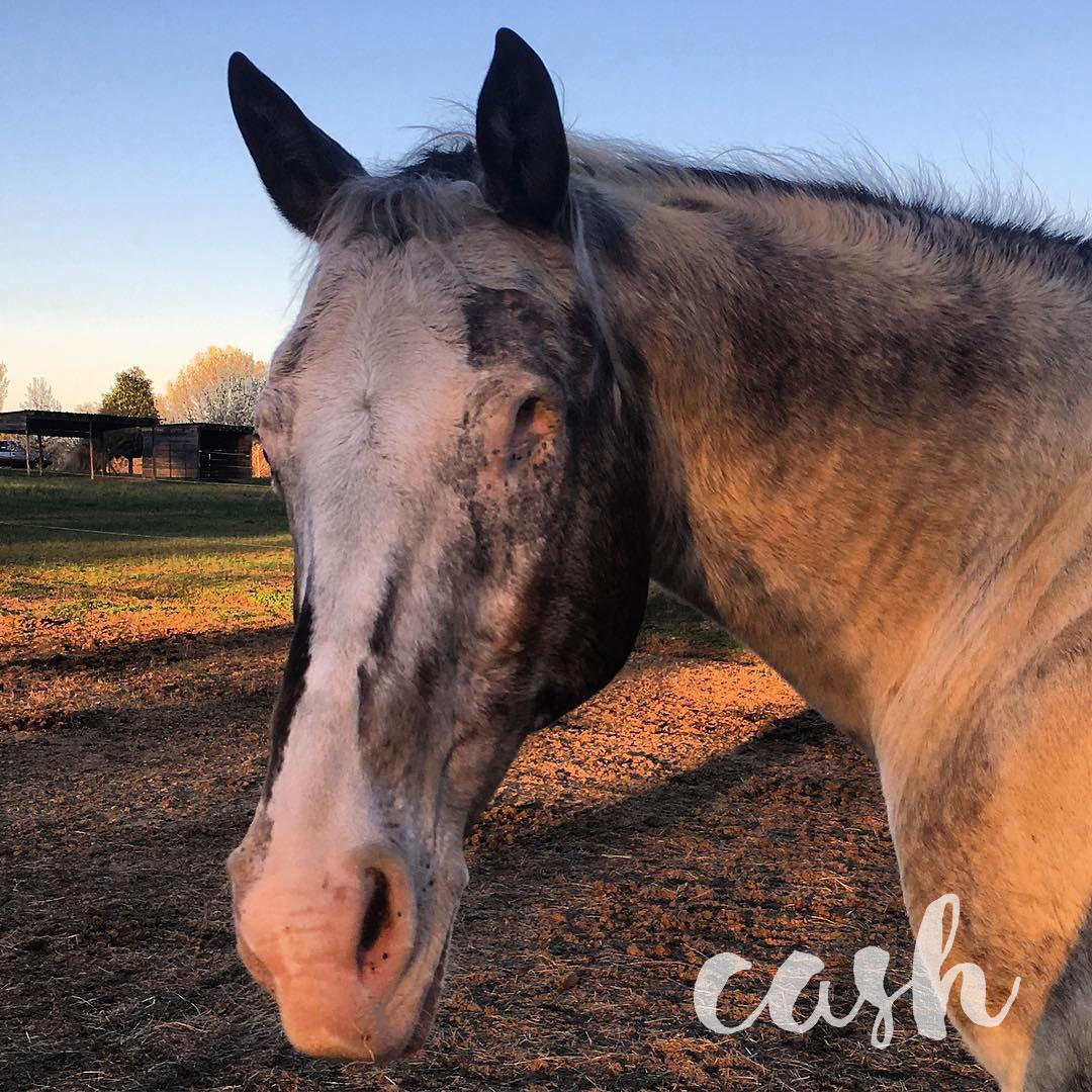 Cash's Equine Recurrent Uveitis (ERU) image preview