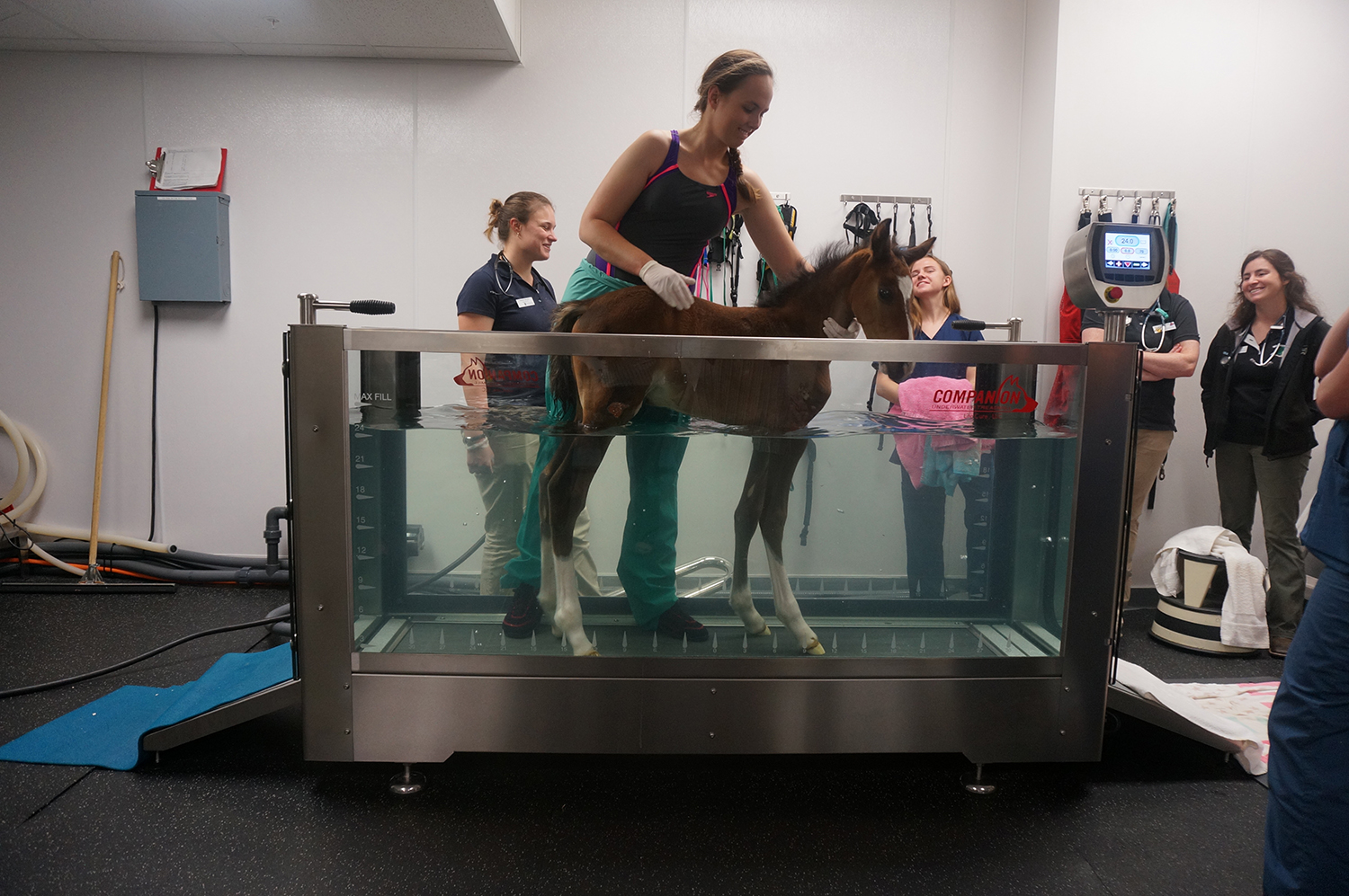Dr Jamie Kopper working with Napoleon in the underwater treadmill