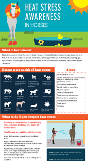 Heat Stress Awareness in Horses image