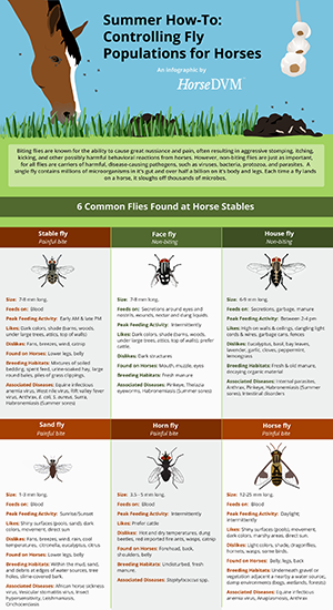 Controlling Fly Populations around Horses image